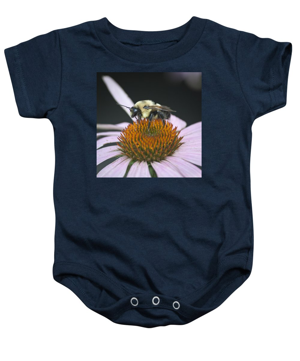 Coneflower Baby Onesie featuring the photograph Resting Bee Squared by Teresa Mucha