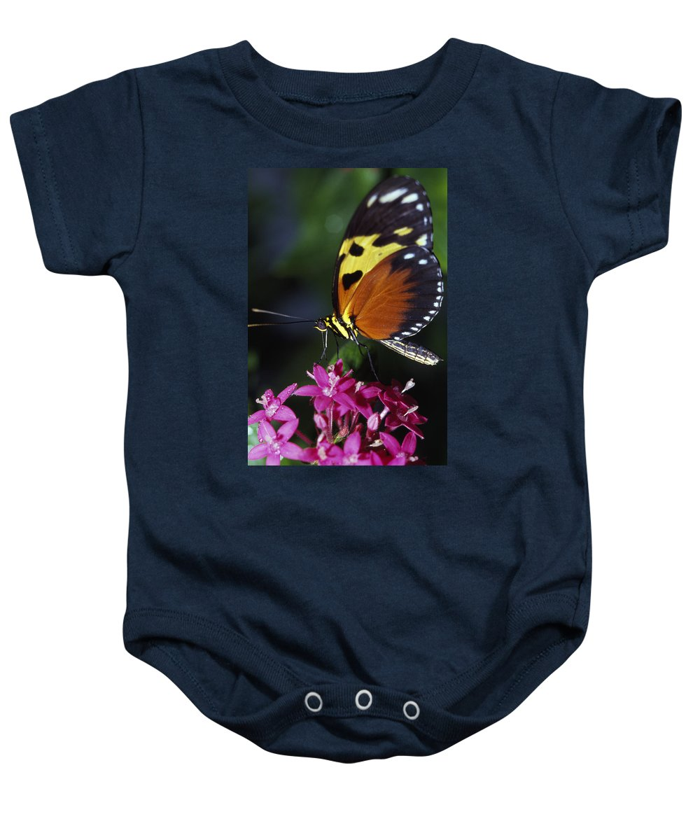 Plant Baby Onesie featuring the photograph Tiger Longwing Butterfly by Natural Selection Ralph Curtin
