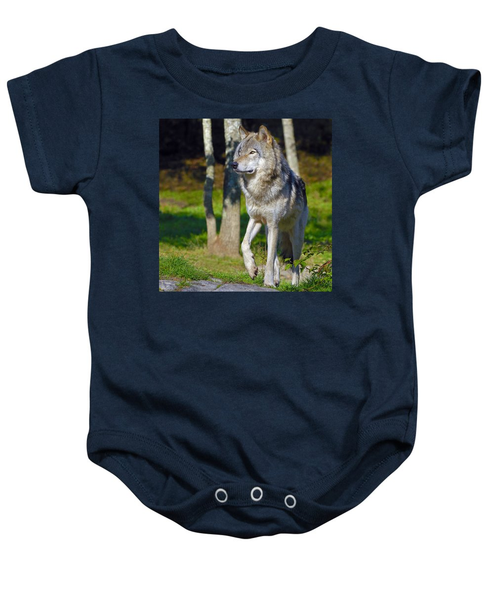 Timber Wolf Baby Onesie featuring the photograph Timber Wolf by Tony Beck