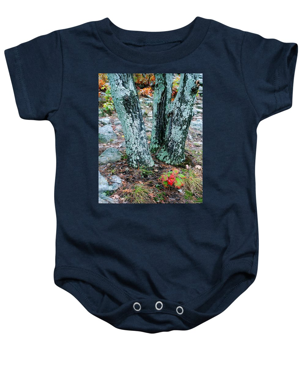 Trees Baby Onesie featuring the photograph Tree Trio In Lichen At Hawn State Park by Greg Matchick