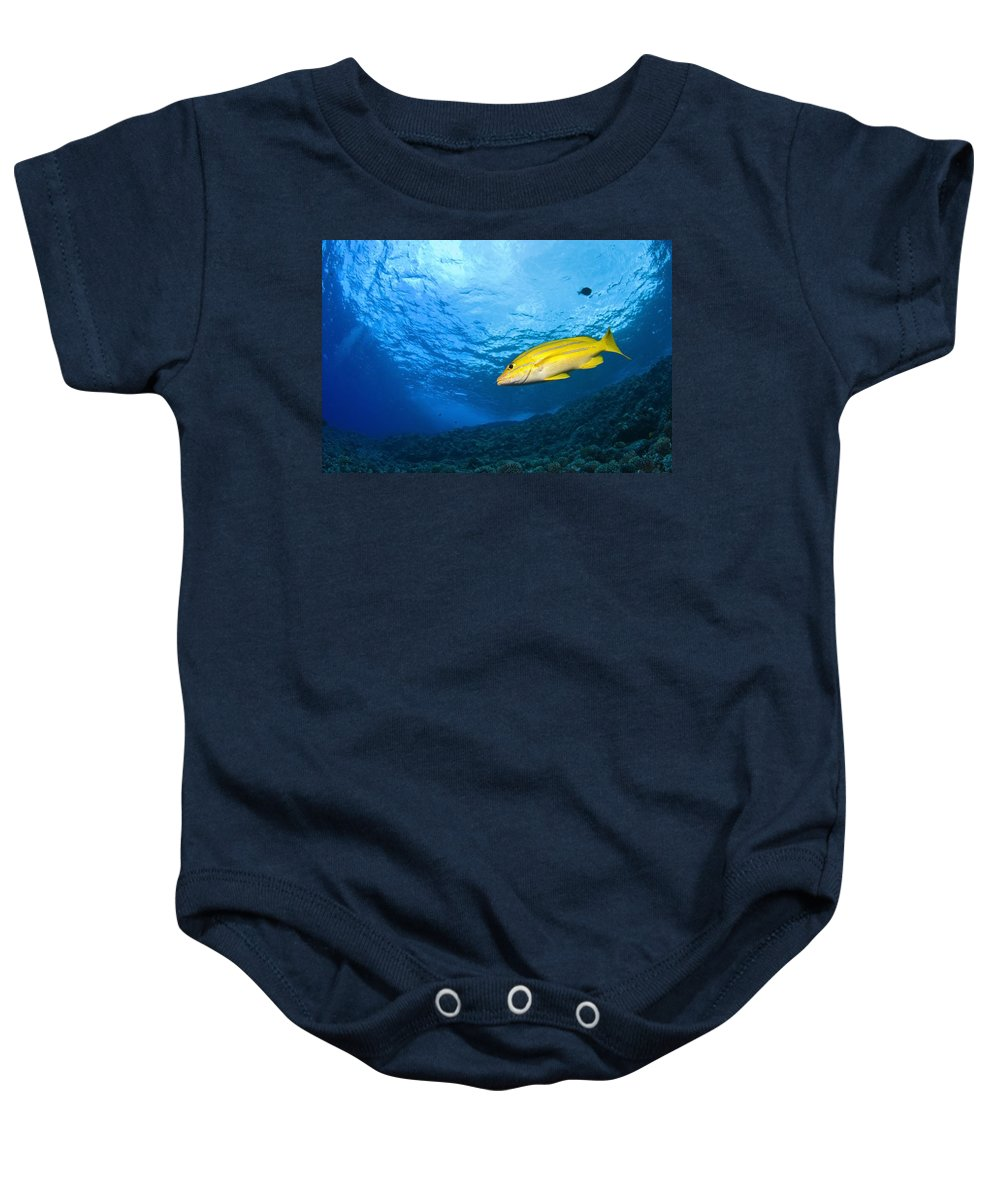 America Baby Onesie featuring the photograph Yellowtail Snapper, Molokini Crater by Stuart Westmorland