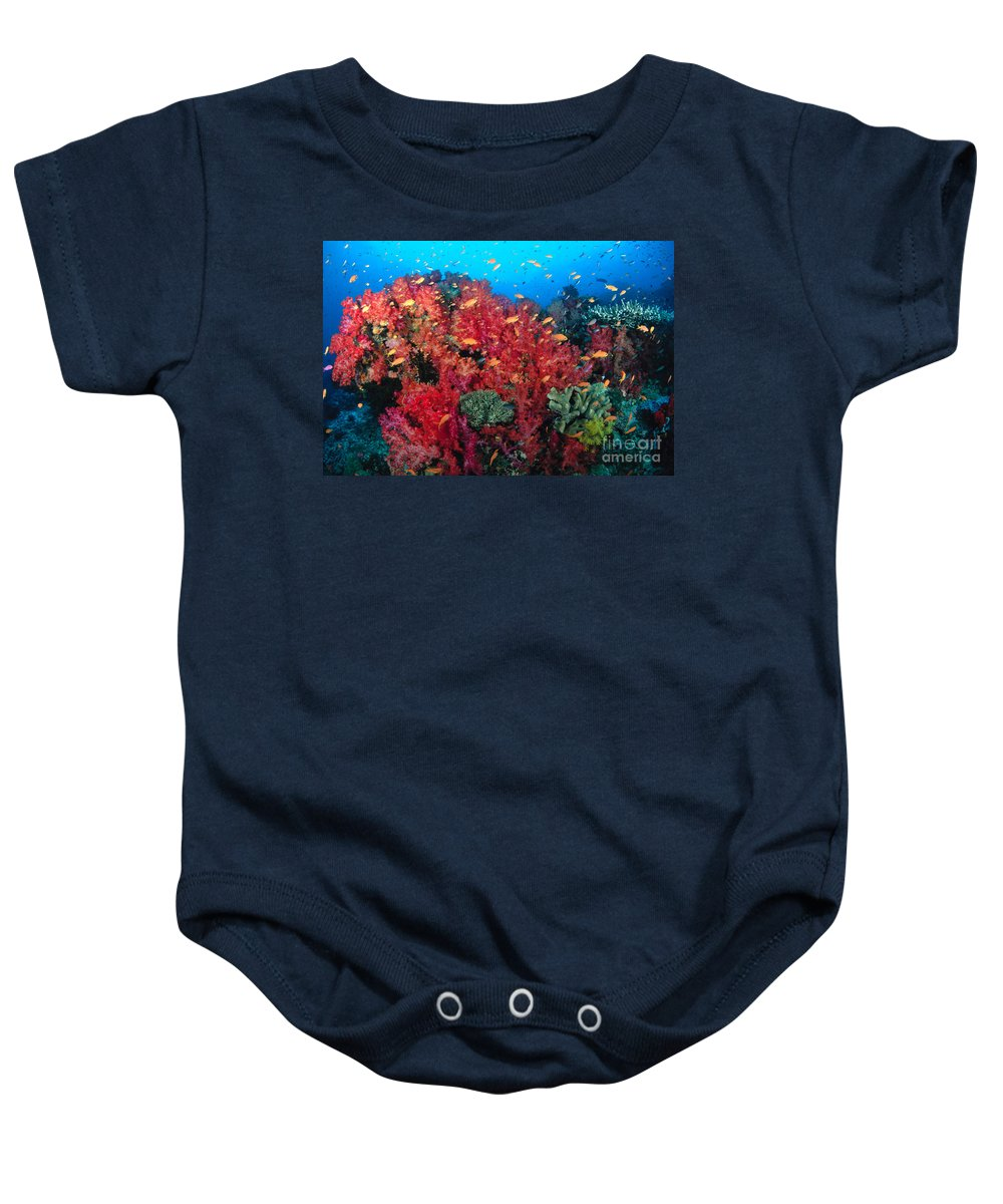 Alcyonarian Baby Onesie featuring the photograph Coral Reef Scene by Dave Fleetham - Printscapes
