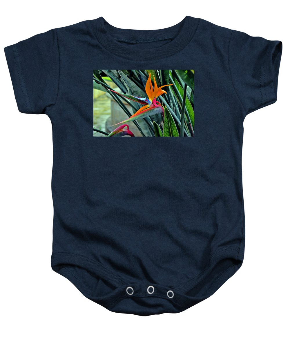 Strelitzia Baby Onesie featuring the photograph Strelitzia by Andy Za