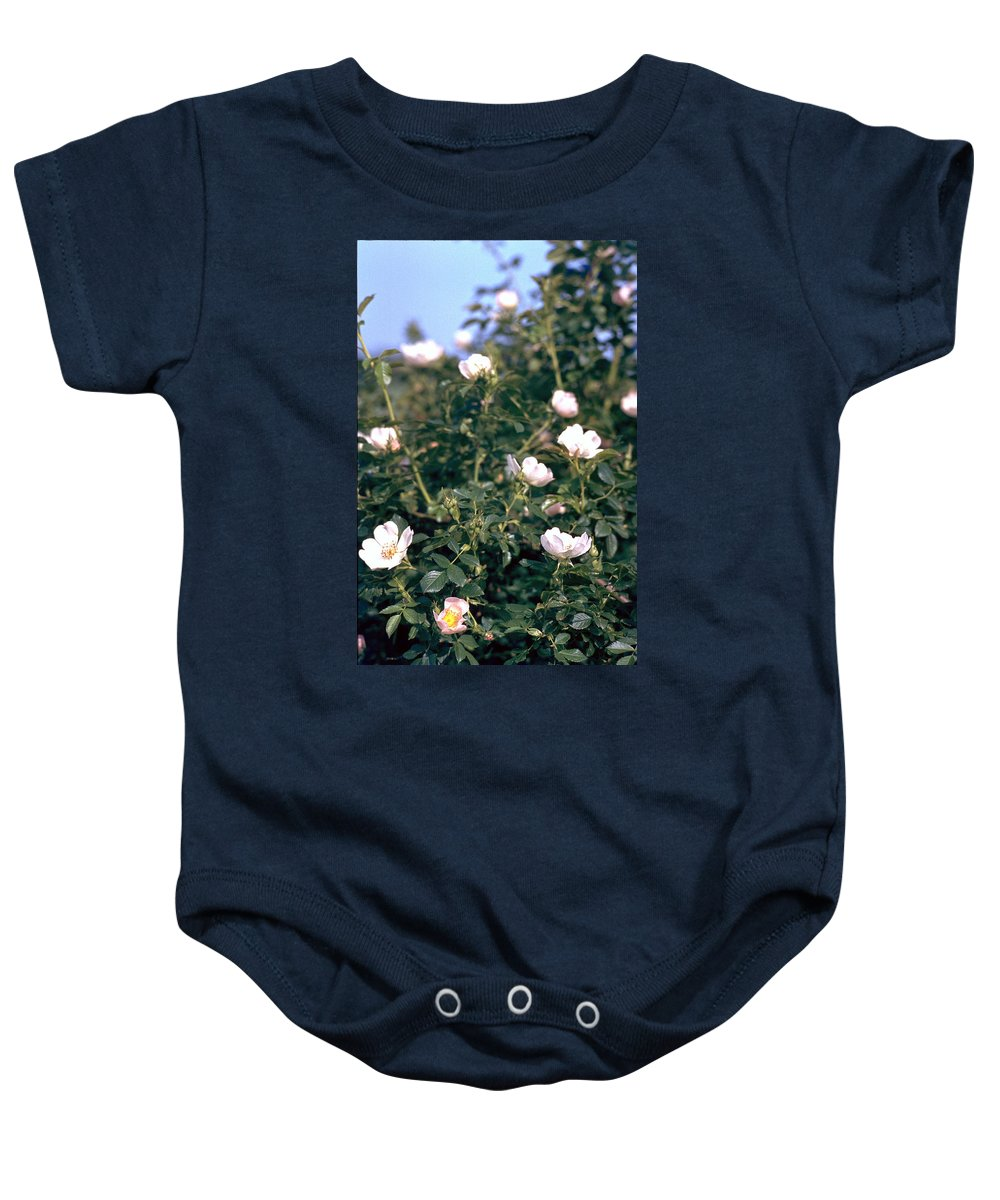 Anemone Baby Onesie featuring the photograph Anemone by Flavia Westerwelle