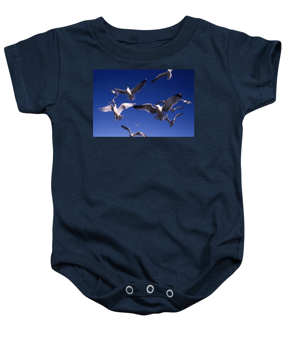Seagull Birds Flight Baby Onesie featuring the photograph Cnrg0302 by Henry Butz