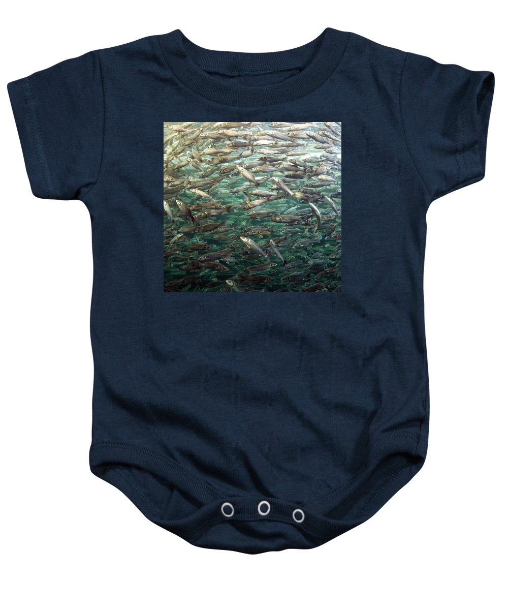 Spain Baby Onesie featuring the photograph Fishes by Jouko Lehto