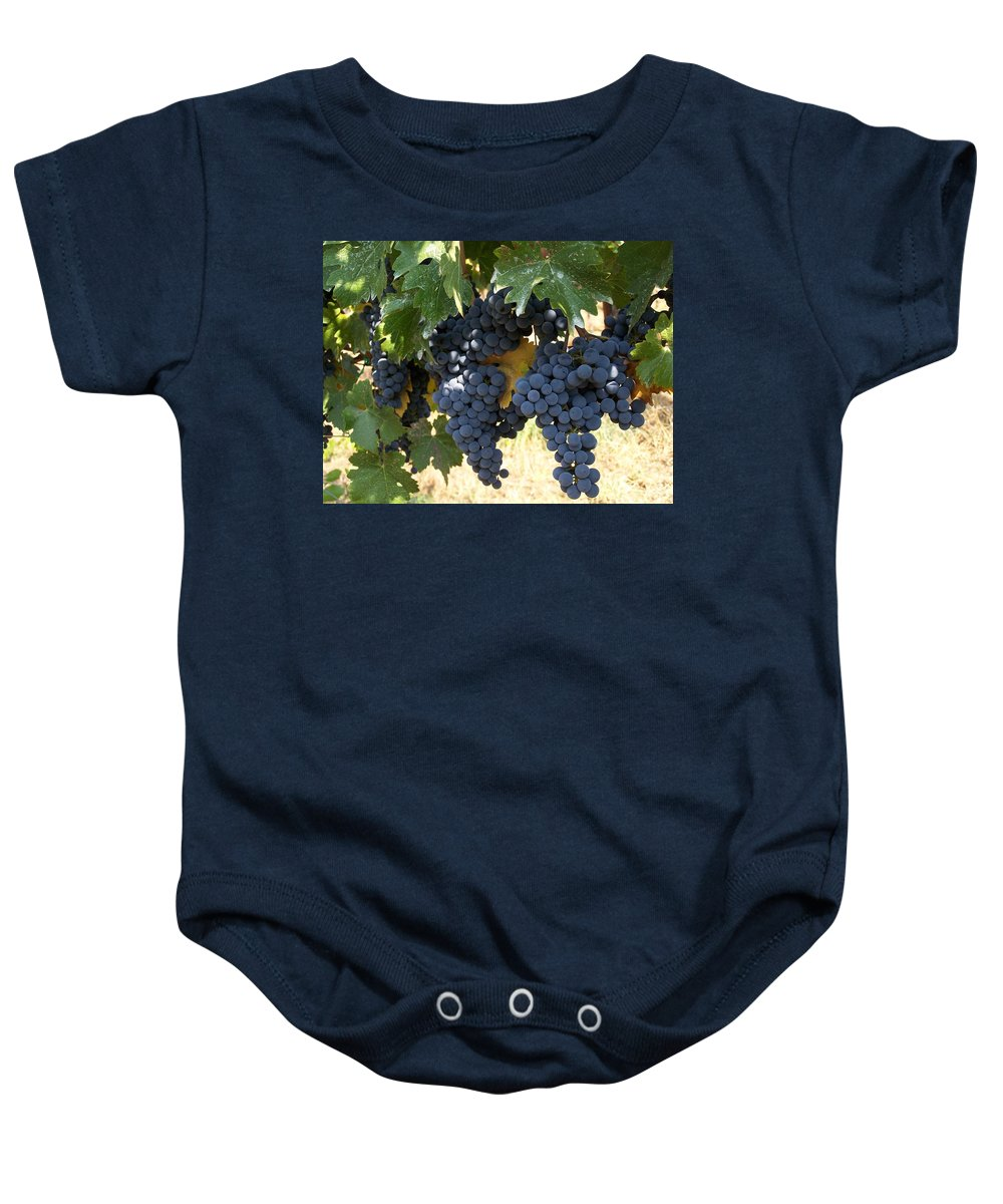 Grapes Baby Onesie featuring the photograph Harvest Time by Gale Cochran-Smith