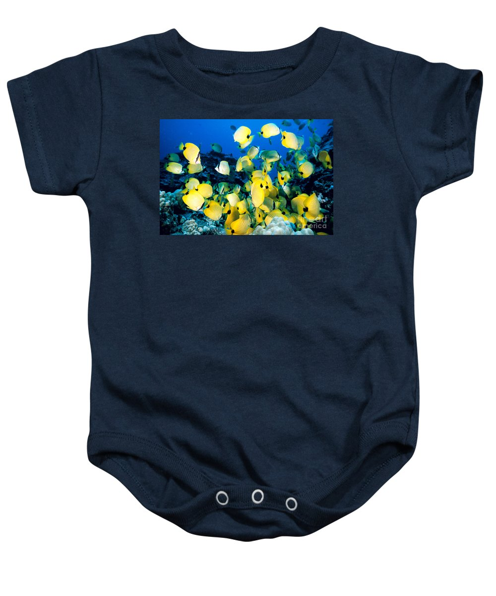 Animal Art Baby Onesie featuring the photograph Lined Butterflyfish by Bob Abraham - Printscapes