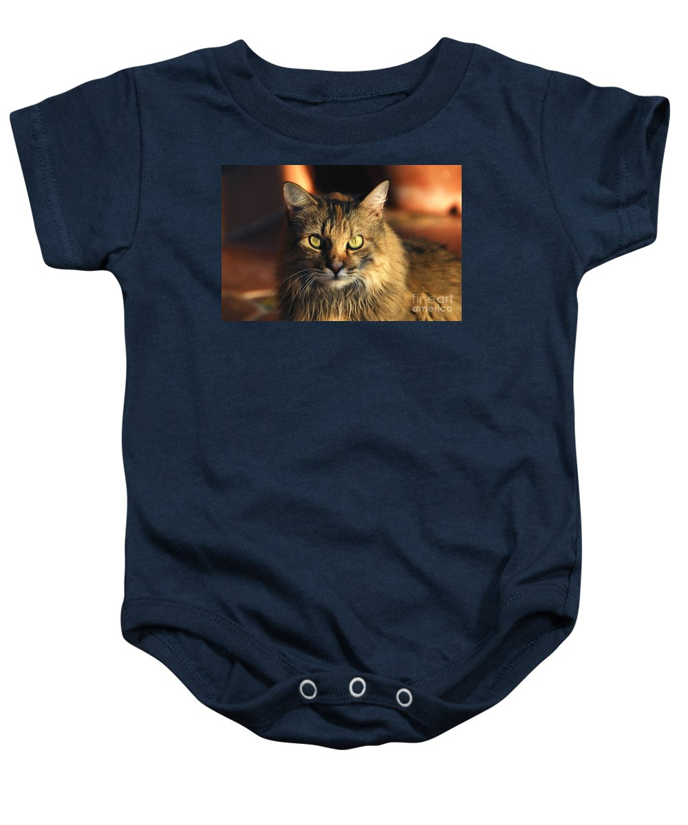 Main Coone Baby Onesie featuring the photograph Main Coone by David Lee Thompson