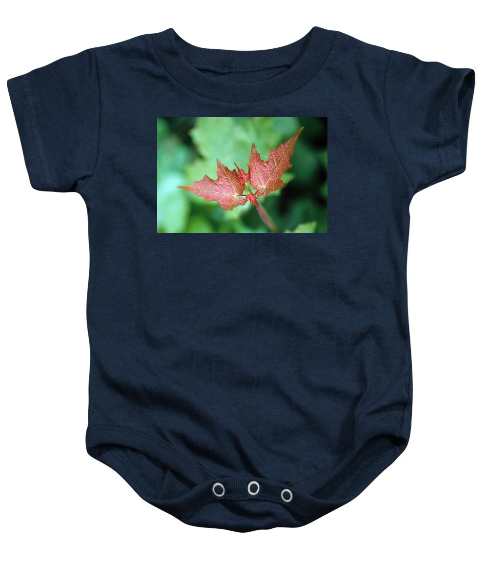 Maple Leaf Baby Onesie featuring the photograph Maple Red And Green by Laurie Paci