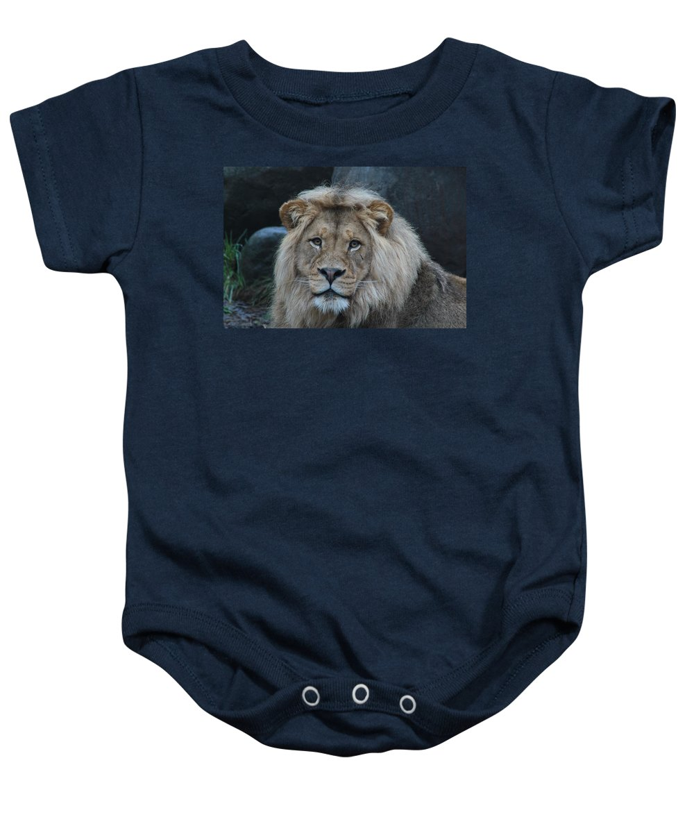 Lion Baby Onesie featuring the photograph Meal Time by Laddie Halupa