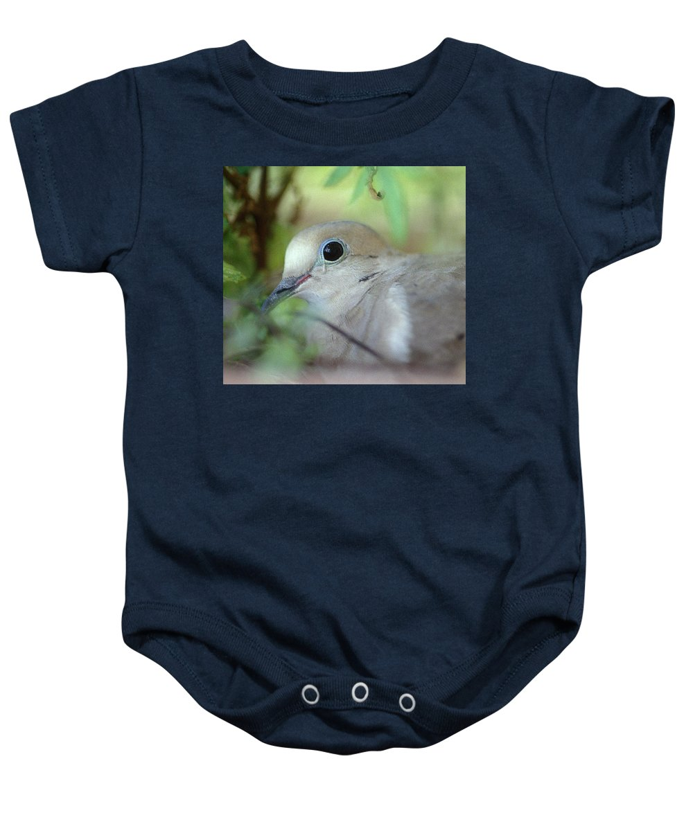 Bird Baby Onesie featuring the photograph Mourning Dove by Yuri Lev