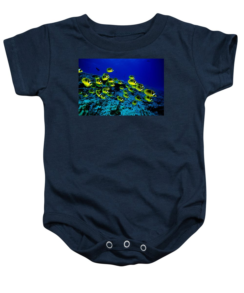 Animal Art Baby Onesie featuring the photograph Schooling Raccoon by Dave Fleetham - Printscapes