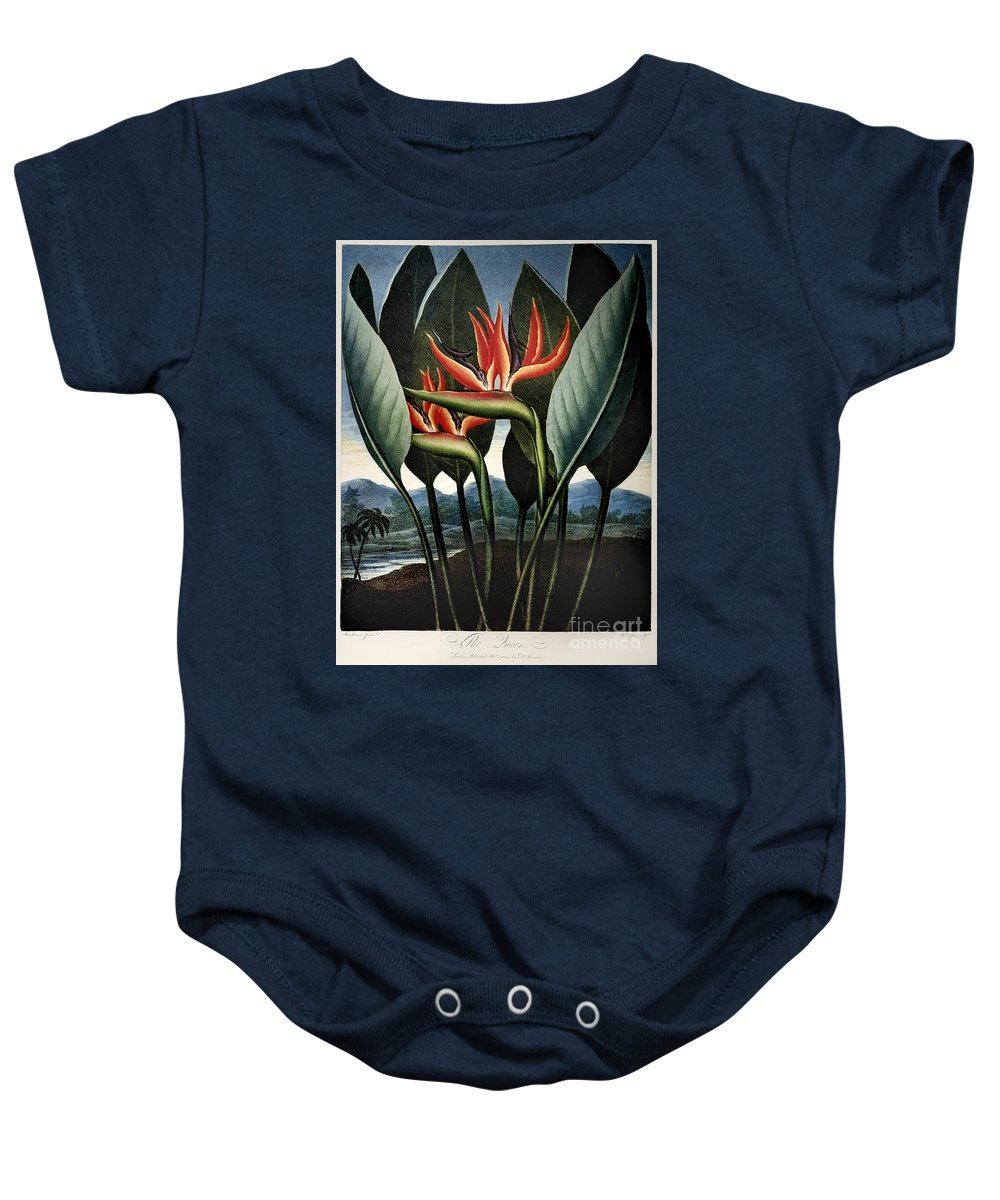 1804 Baby Onesie featuring the photograph Thornton: Strelitzia by Granger