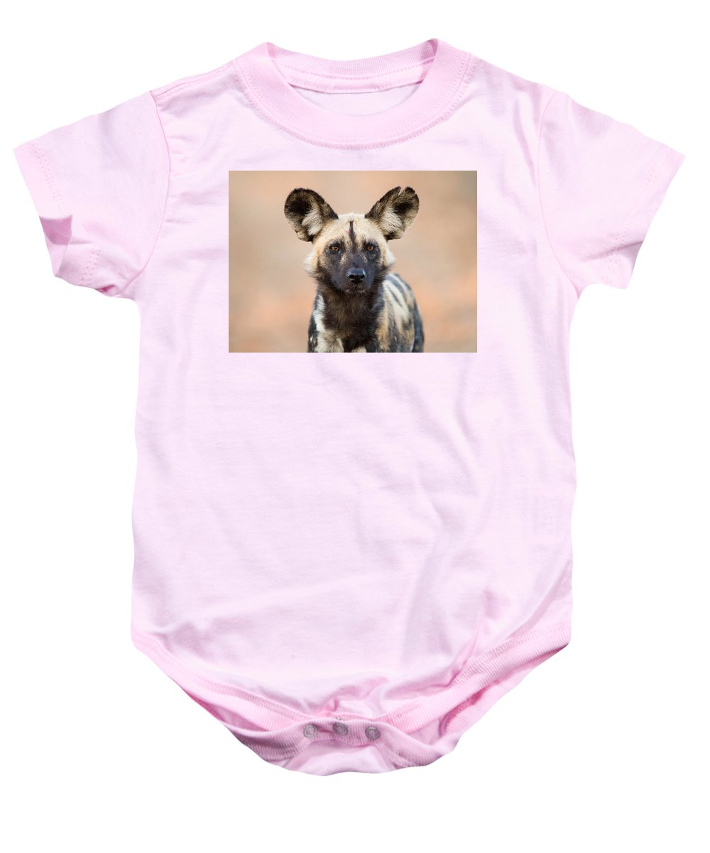 African Wild Dog Baby Onesie featuring the photograph African Wild Dog by Max Waugh