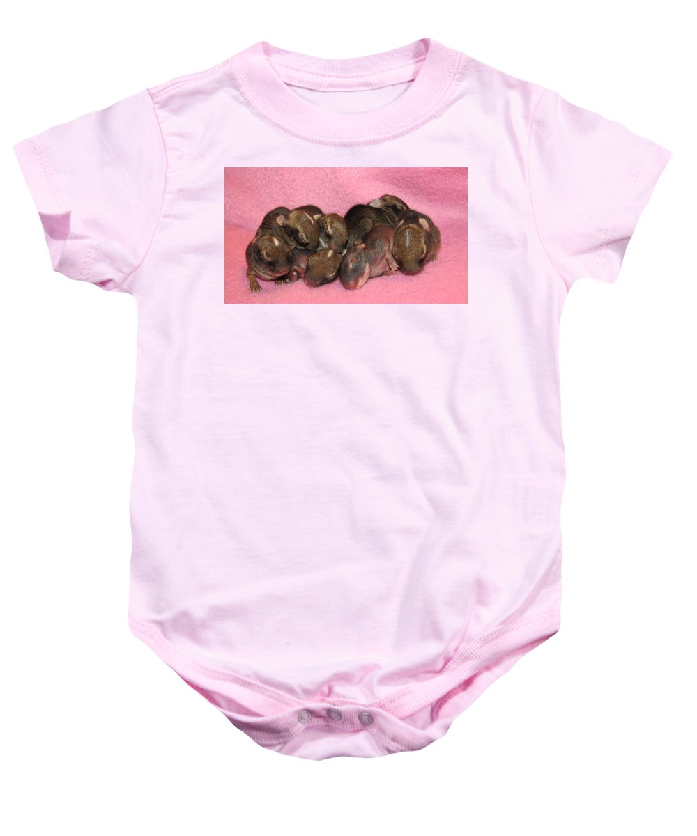 Rabbit Baby Onesie featuring the photograph Bunny Baby Boom by Art Dingo