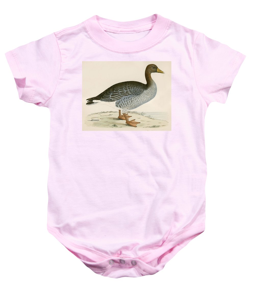 Birds Baby Onesie featuring the photograph Gray Lag Goose by Beverley R. Morris