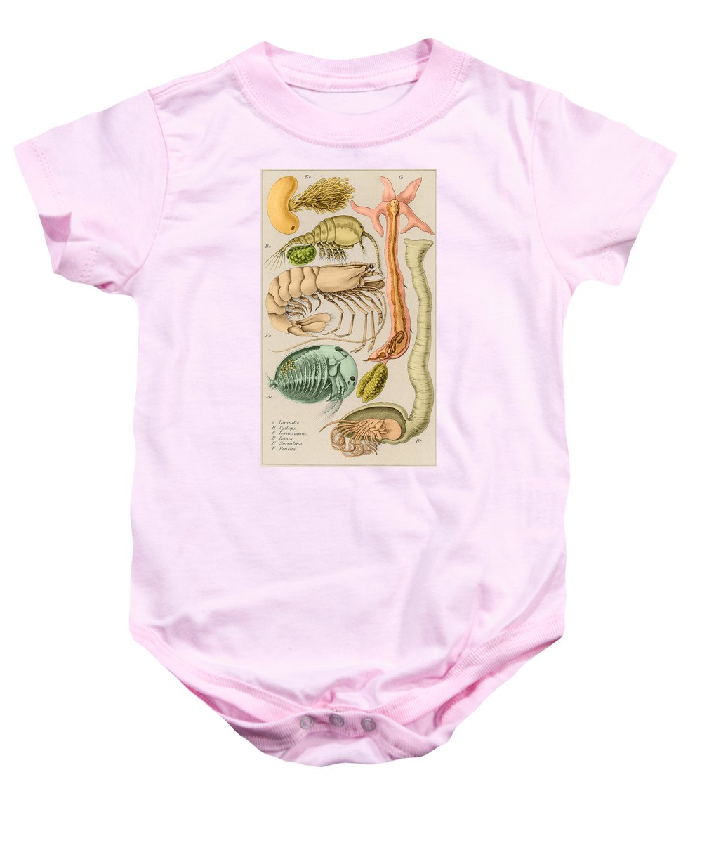 Fauna Baby Onesie featuring the photograph Marine Fauna by Science Source