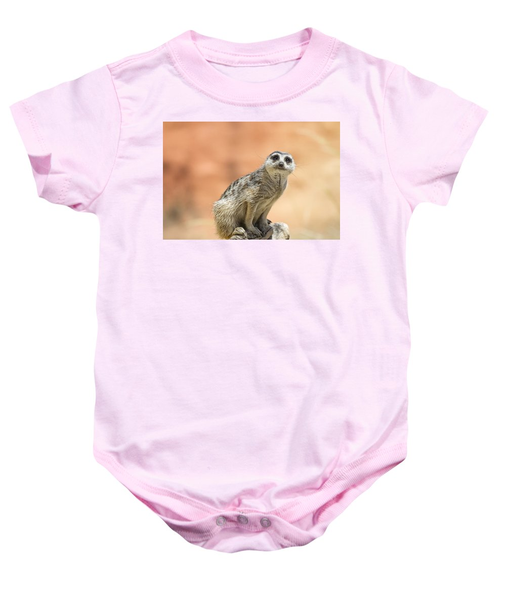 Meerkat Baby Onesie featuring the photograph Meerkat Manor V3 by Douglas Barnard