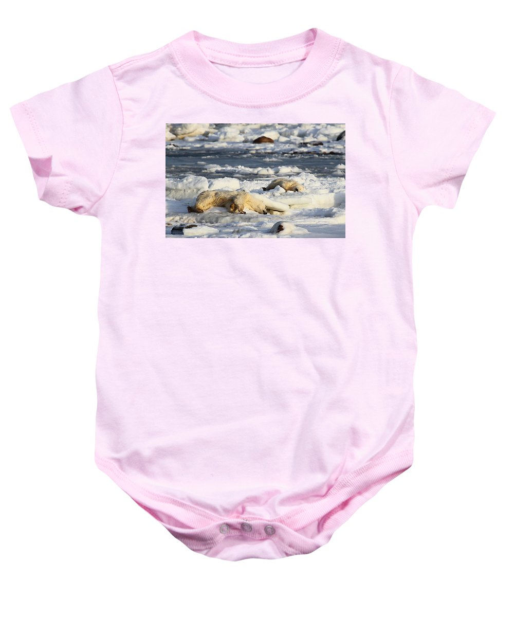 Polar Bears Baby Onesie featuring the photograph Polar Bear Mother And Cub Grooming by Carole-Anne Fooks