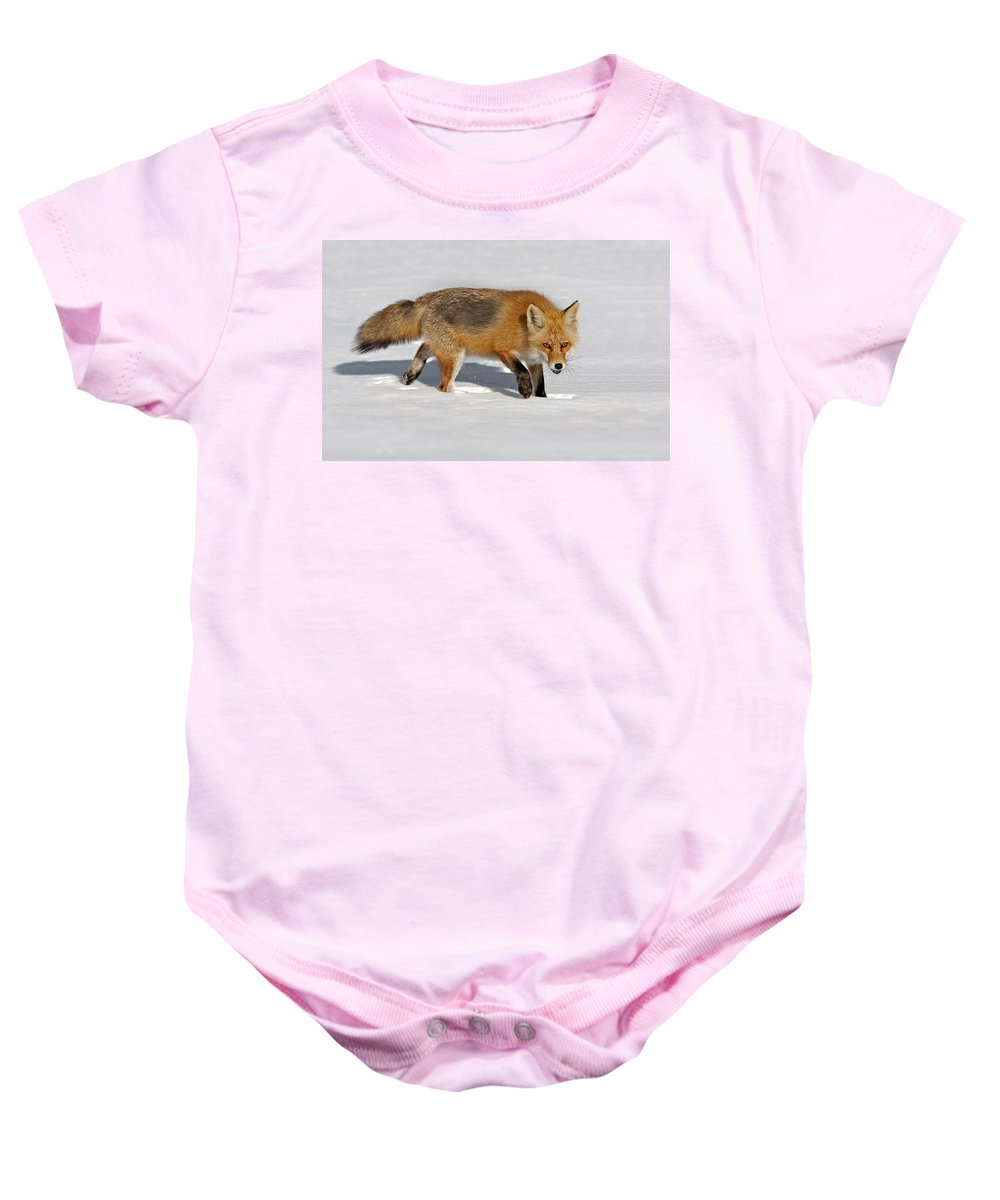 Red Fox Baby Onesie featuring the photograph Foxy Lady by Susan Candelario