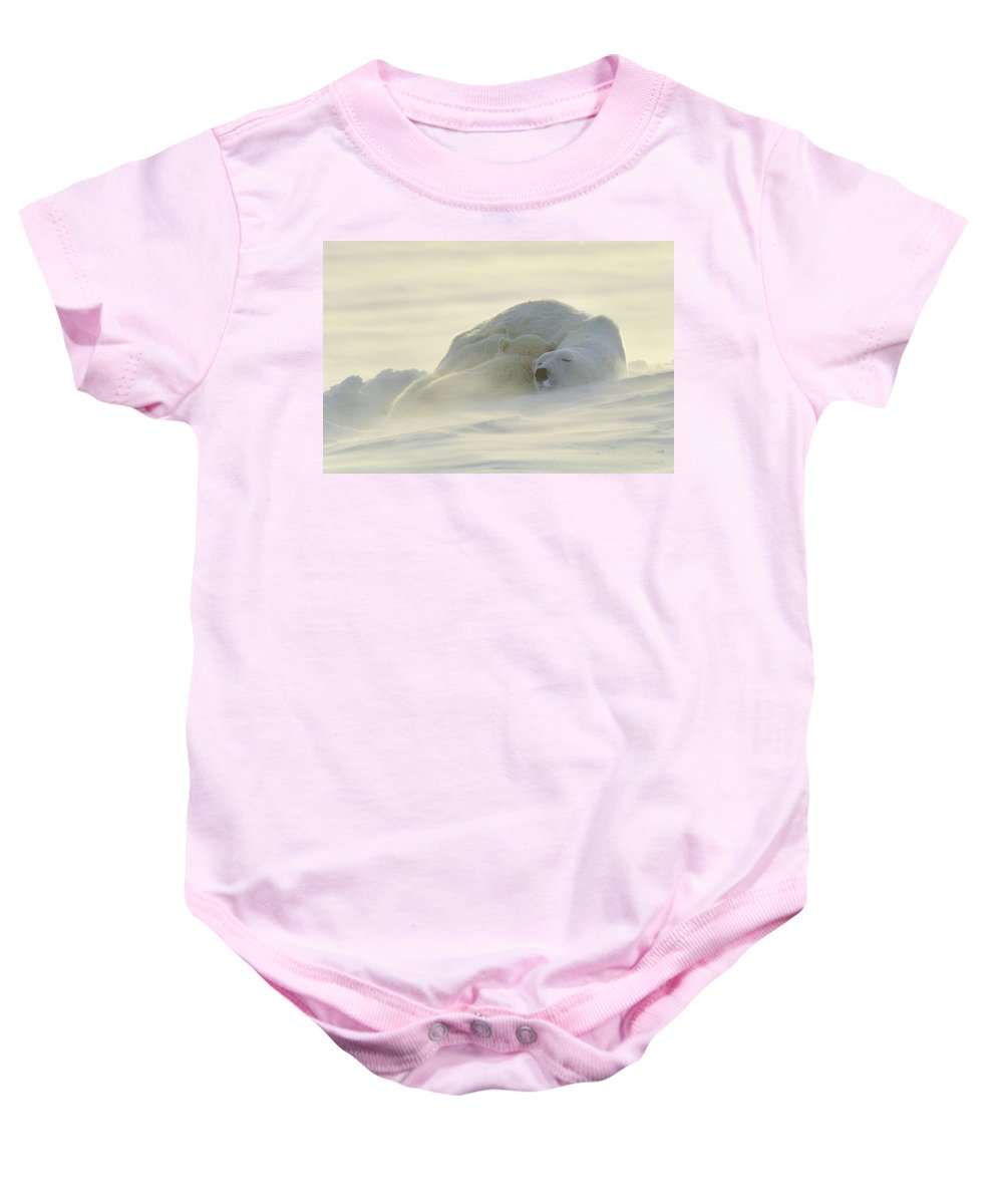 Winter Baby Onesie featuring the photograph Polar Bears Sleeping At Sunset by John Pitcher