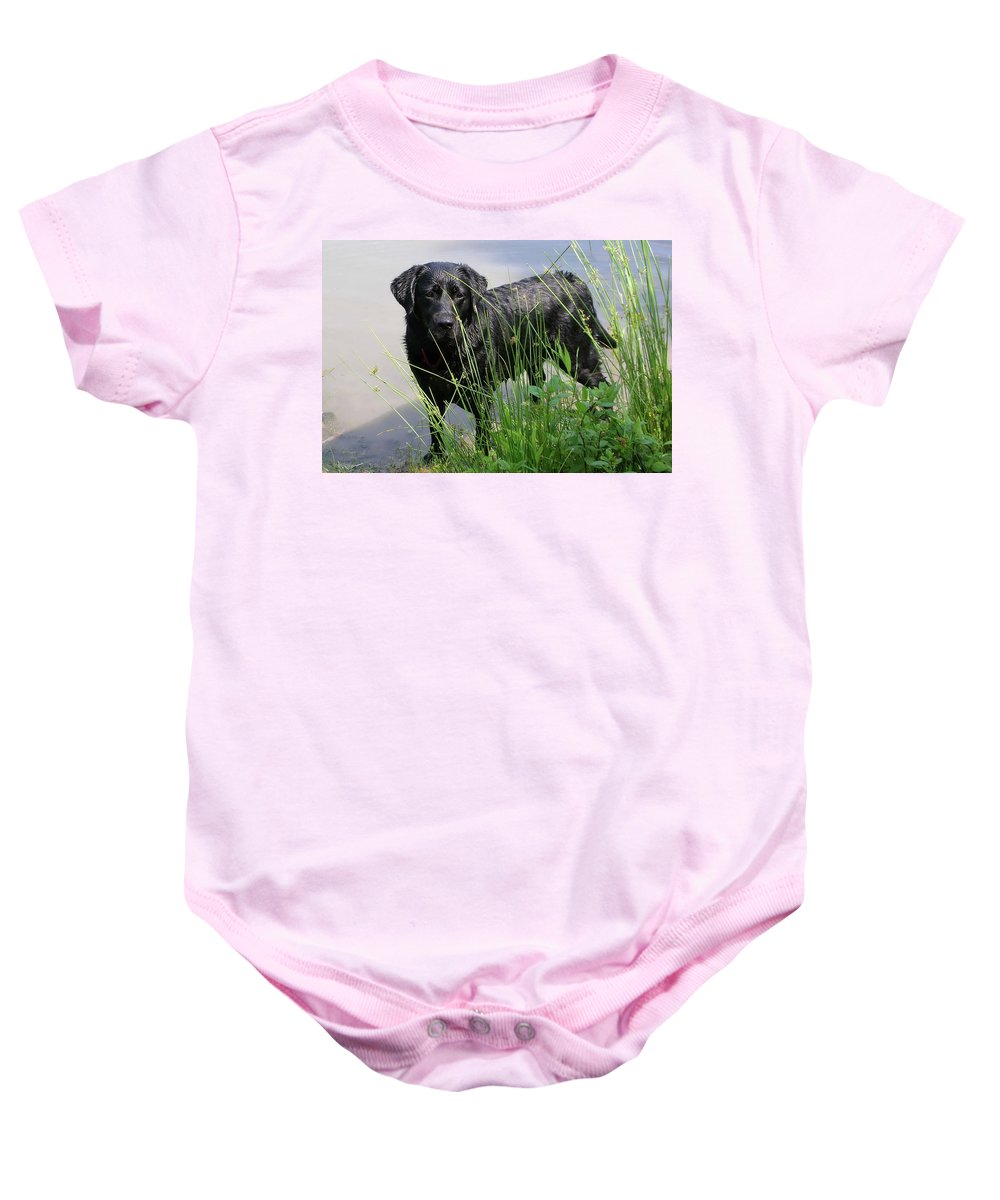 Animals Baby Onesie featuring the photograph Chicago 0121 by Guy Whiteley