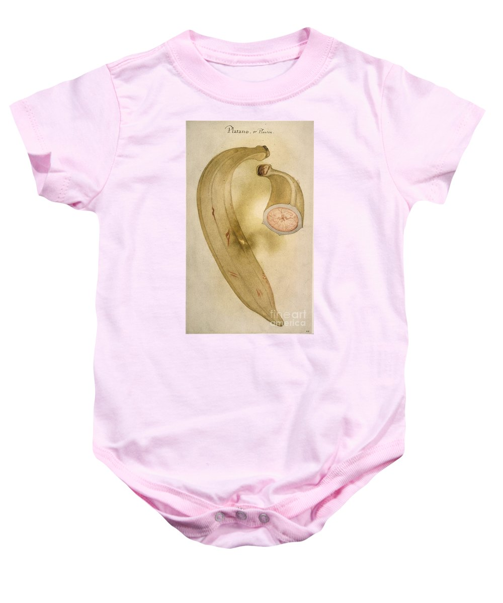 1585 Baby Onesie featuring the photograph Horn Plantain, 1585 by Granger