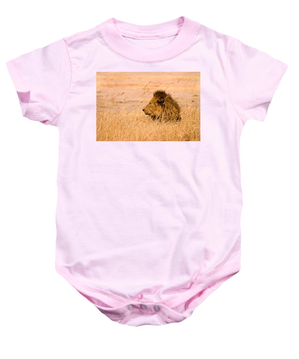 3scape Baby Onesie featuring the photograph King Of The Pride by Adam Romanowicz