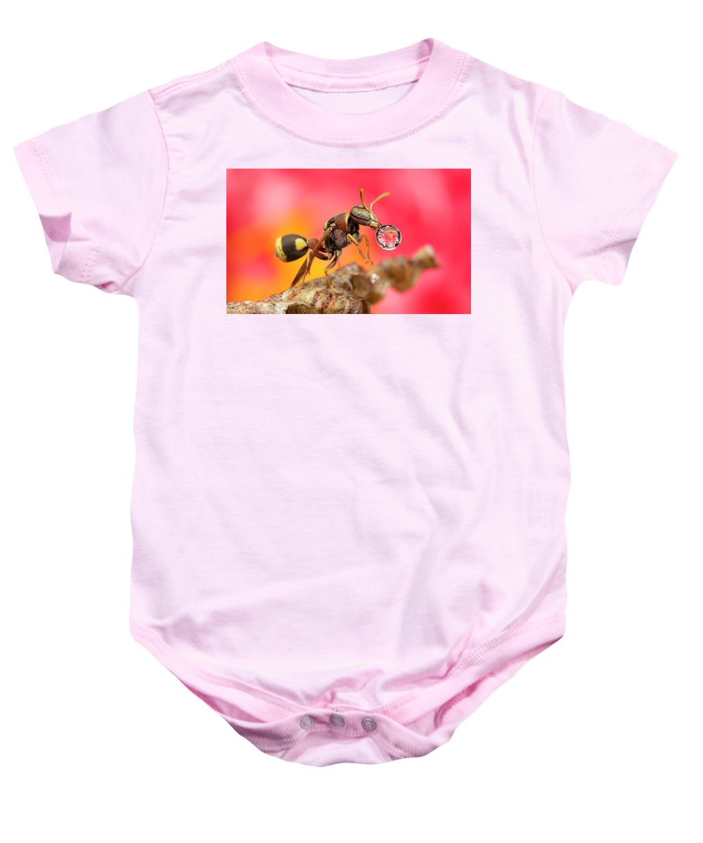 Macro Baby Onesie featuring the photograph Wasp Blowig Bubble 160507e by Lim Choo How