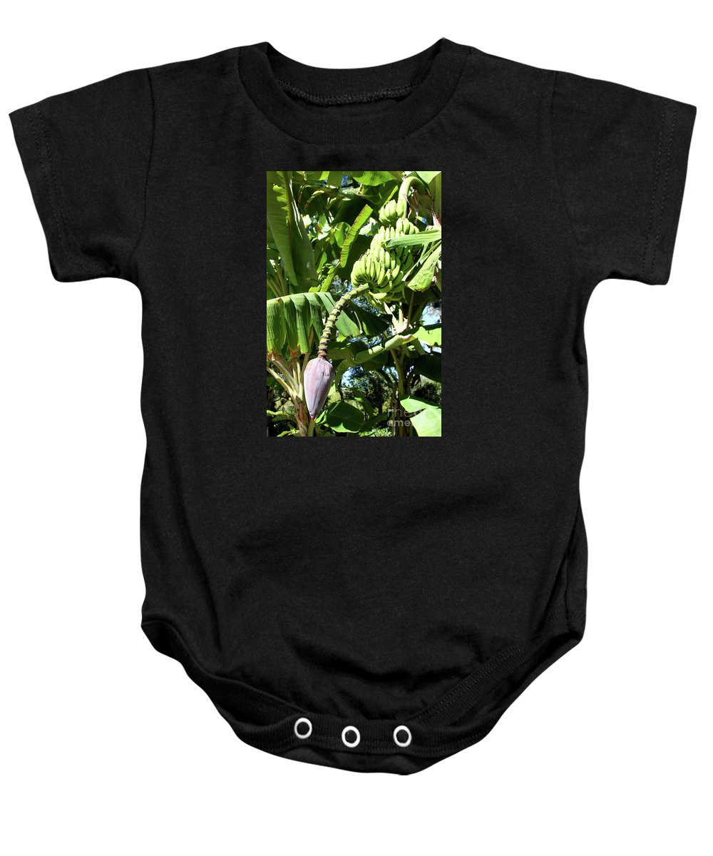 Banana Tree Baby Onesie featuring the photograph Banana Tree by Christiane Schulze Art And Photography