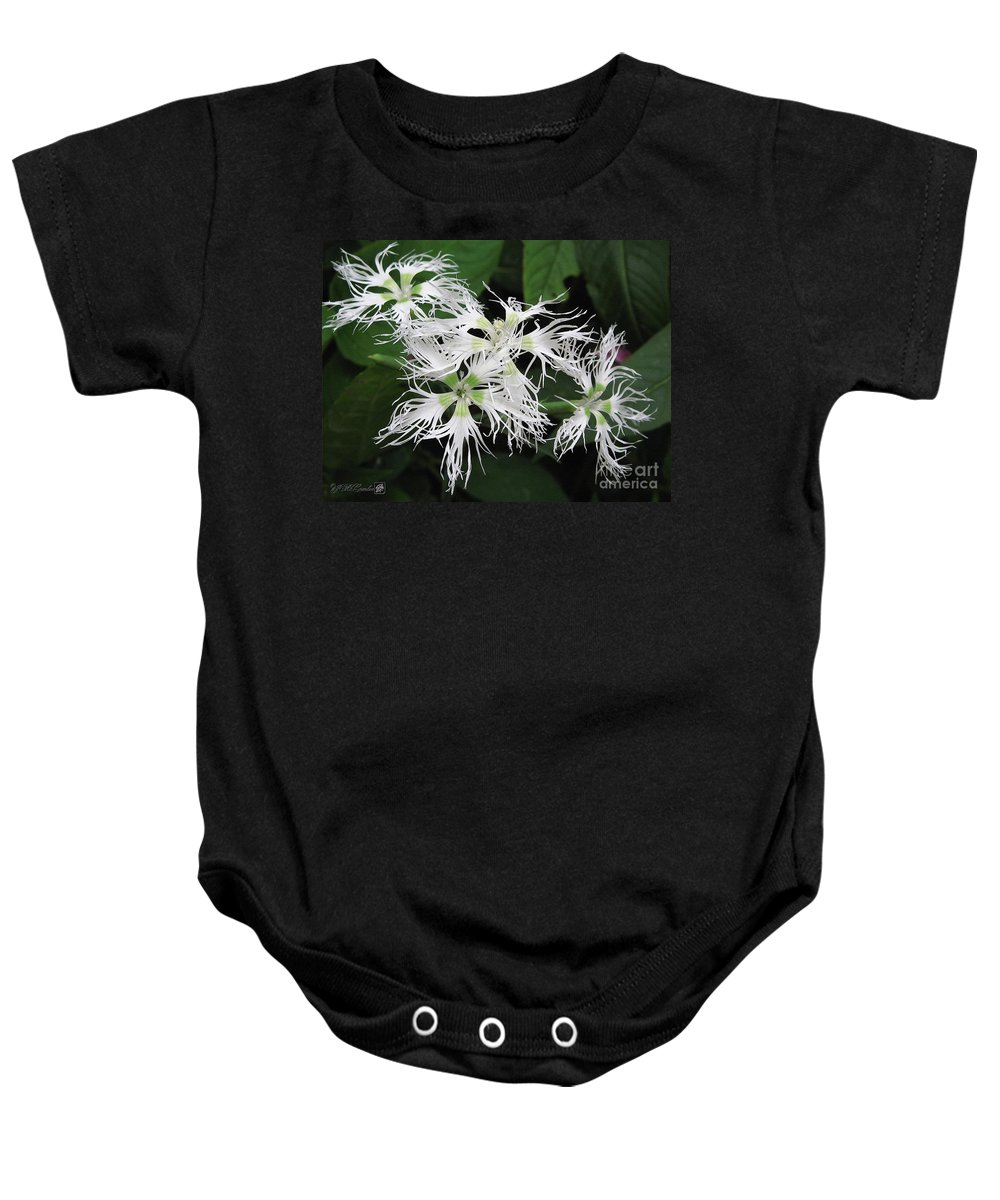 Dianthus Baby Onesie featuring the painting Dianthus Superbus - White by J McCombie