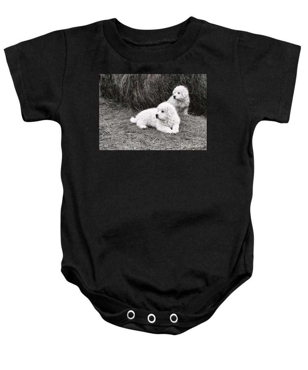Puppys Baby Onesie featuring the photograph Great Pyramise Pups by Bonnie Willis