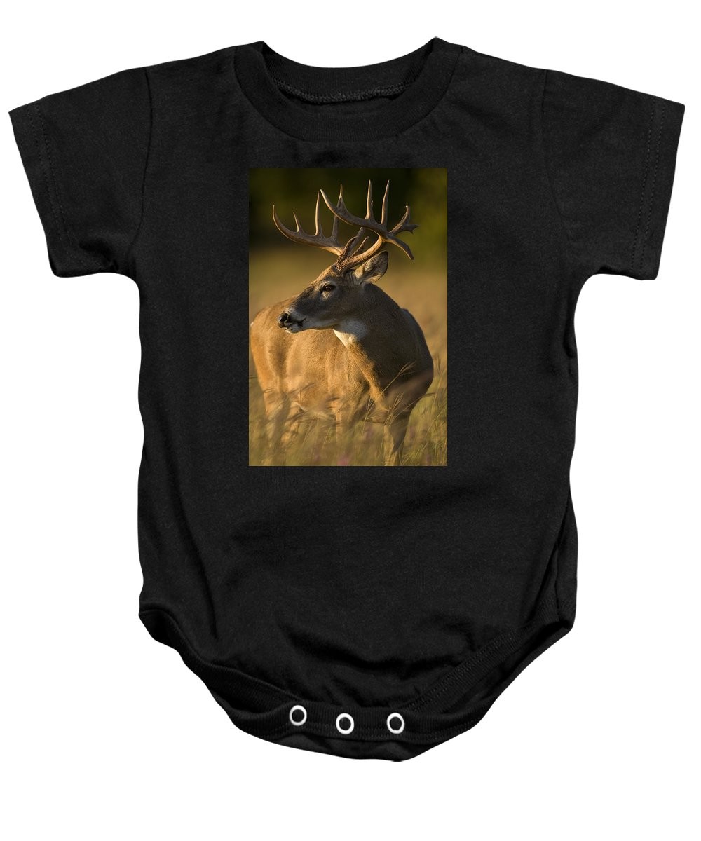 Deer Baby Onesie featuring the photograph Healthy by Jack Milchanowski