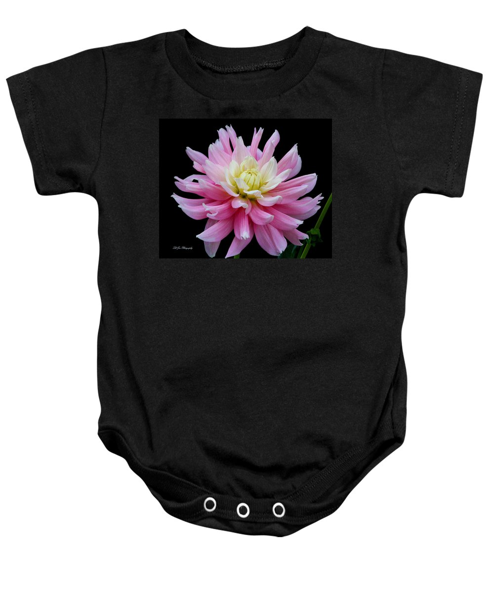 Dahlia Baby Onesie featuring the photograph Pink Dahlia by Jeanette C Landstrom
