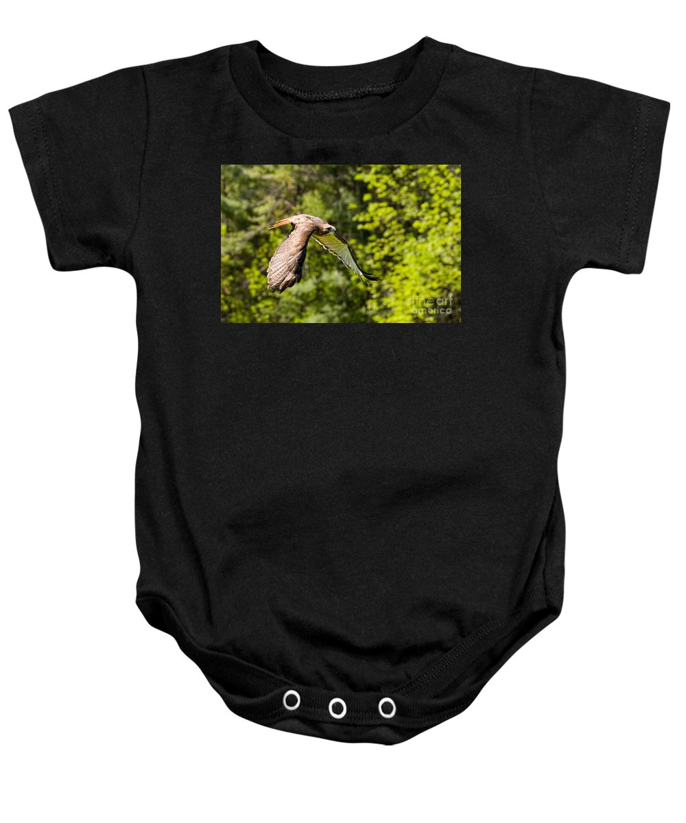 Hawk Baby Onesie featuring the photograph Red Tailed Hawk by Les Palenik