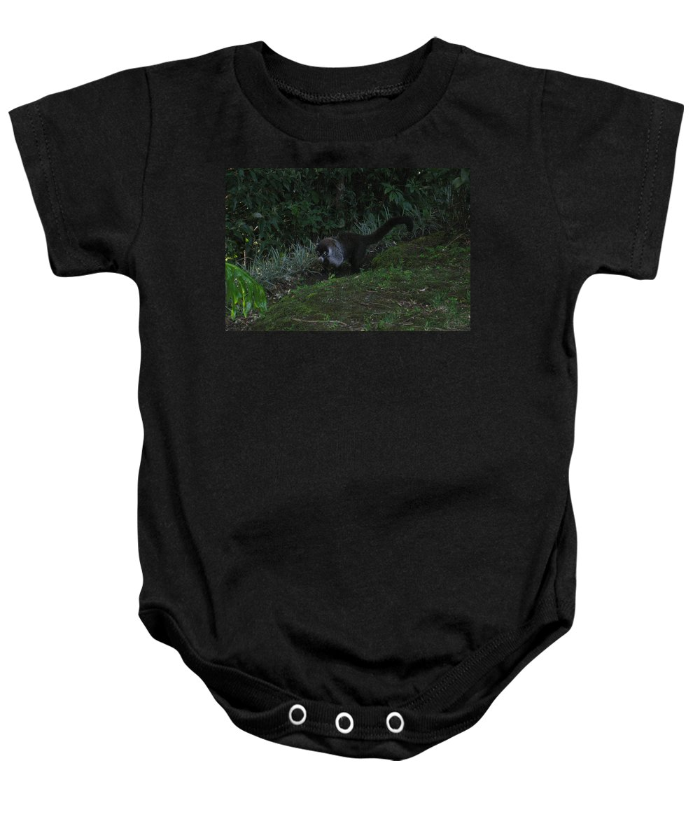 Tayra Baby Onesie featuring the mixed media Tayra Costa Rica Animals Zoo Habitat Indigenous Population Mixing With Travellers Enjoying And Being by Navin Joshi