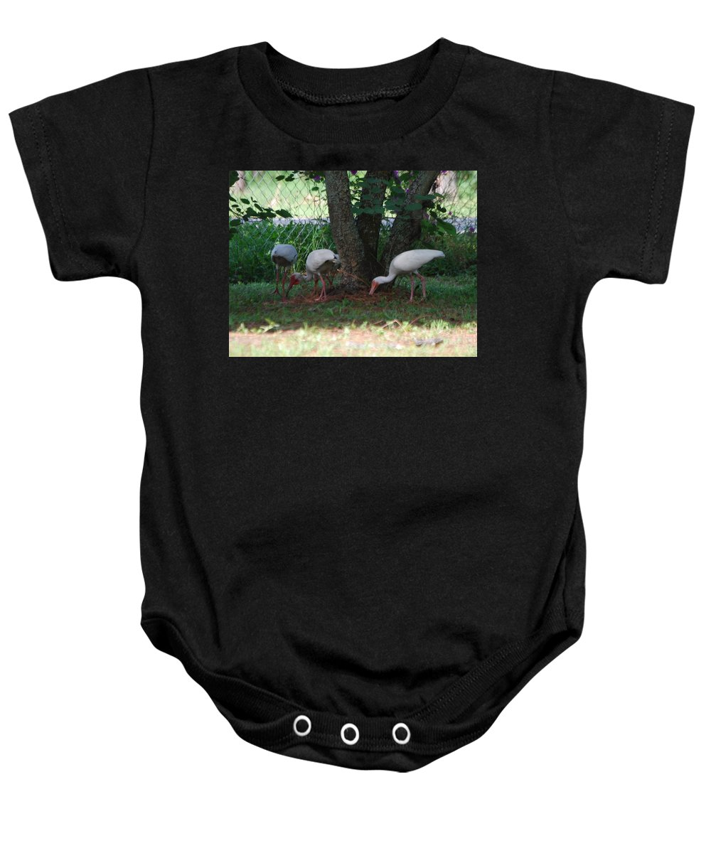 Digging For Bugs Baby Onesie featuring the photograph White Ibis by Robert Floyd