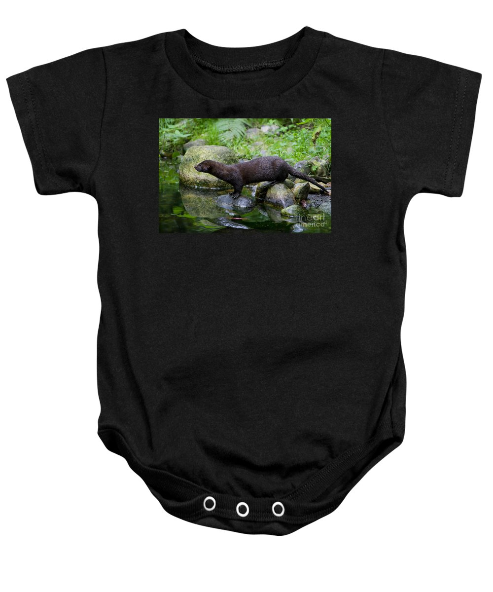 American Mink Baby Onesie featuring the photograph 121213p013 by Arterra Picture Library