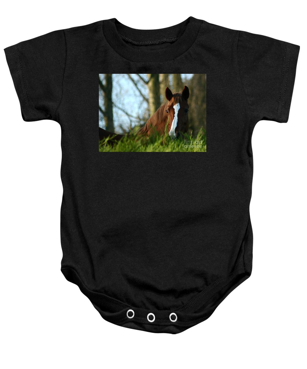 Chestnut Horse Baby Onesie featuring the photograph Behind The Fence by Angel Ciesniarska