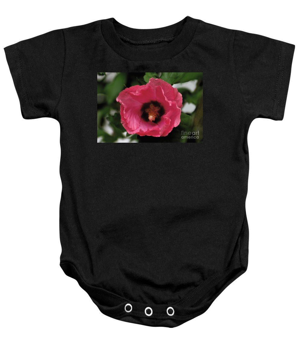 Pink Baby Onesie featuring the photograph Rose Of Sharon by William Norton