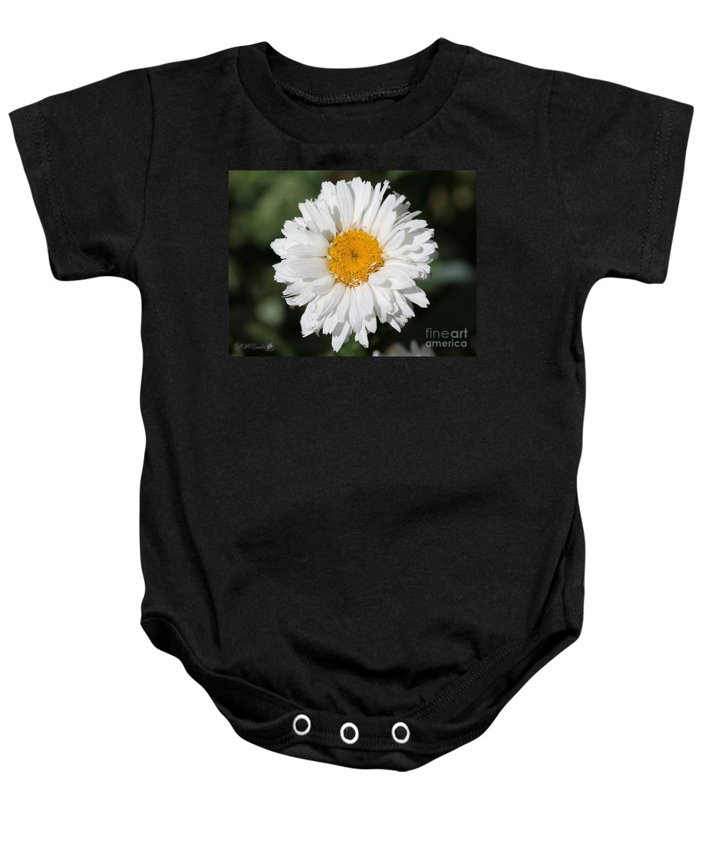 Mccombie Baby Onesie featuring the photograph Shasta Daisy Named Paladin by J McCombie