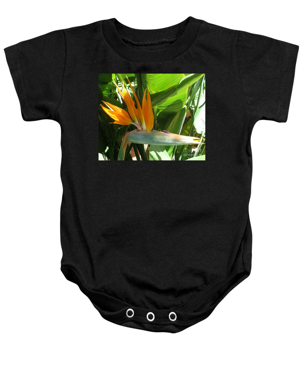 Bird Of Paradise Baby Onesie featuring the photograph Bird Of Paradise by Christiane Schulze Art And Photography