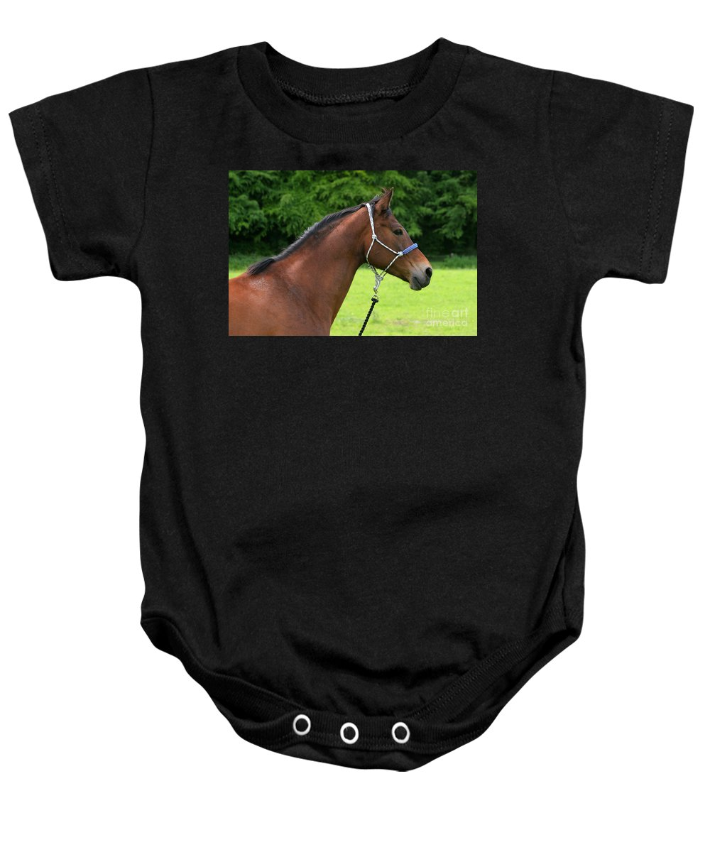 Bay Horse Baby Onesie featuring the photograph Horse Portrait by Angel Ciesniarska
