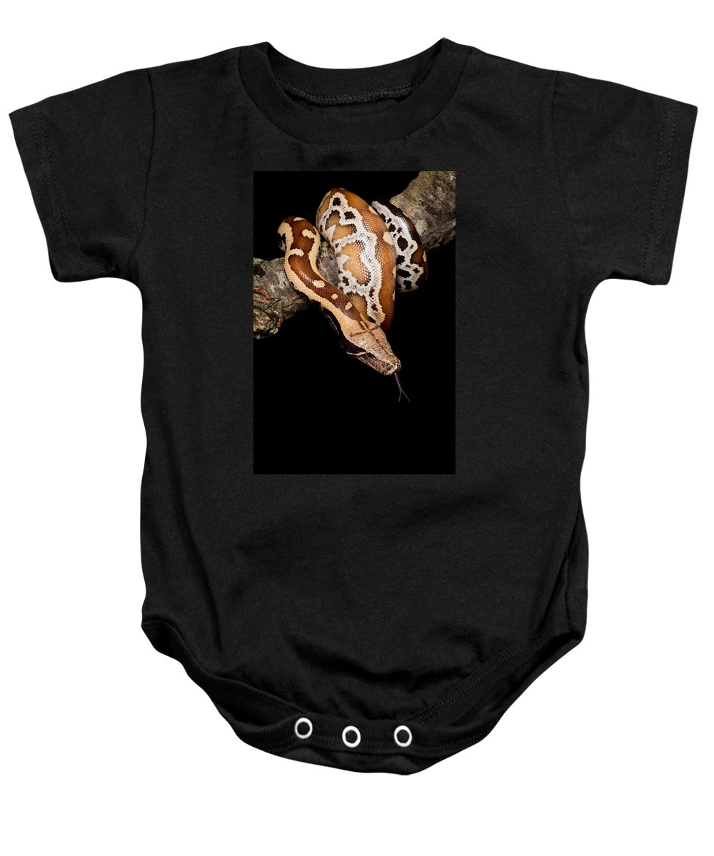 Blood Python Baby Onesie featuring the photograph Blood Python by David Kenny