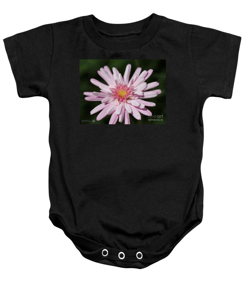 Mccombie Baby Onesie featuring the photograph Marguerite Daisy Named Double Pink by J McCombie