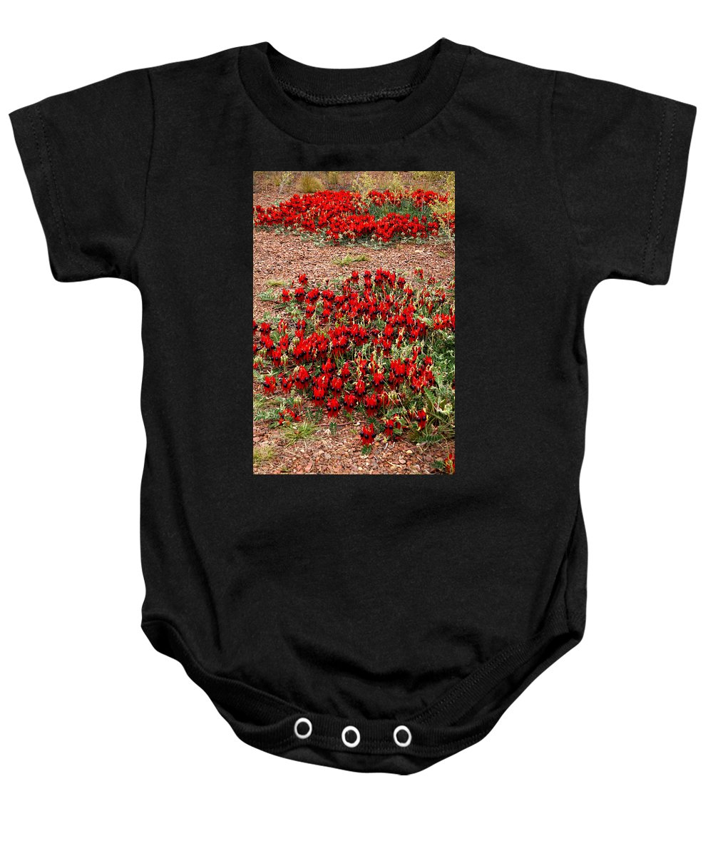 Sturts Desert Pea Baby Onesie featuring the photograph Sturt's Desert Pea Outback South Australia by Carole-Anne Fooks