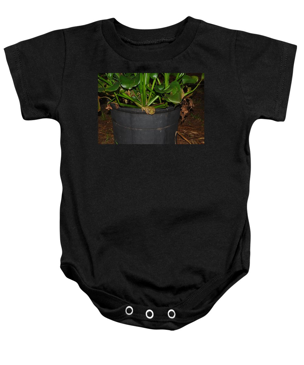 Hanging Out Baby Onesie featuring the photograph Tree Frog by Robert Floyd