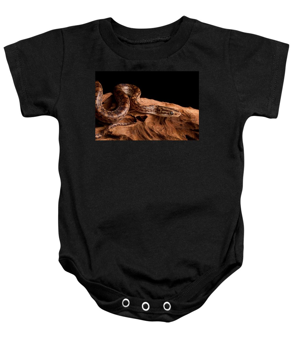 Animal Baby Onesie featuring the photograph Colombian Rainbow Boa Epicrates Maurus by David Kenny