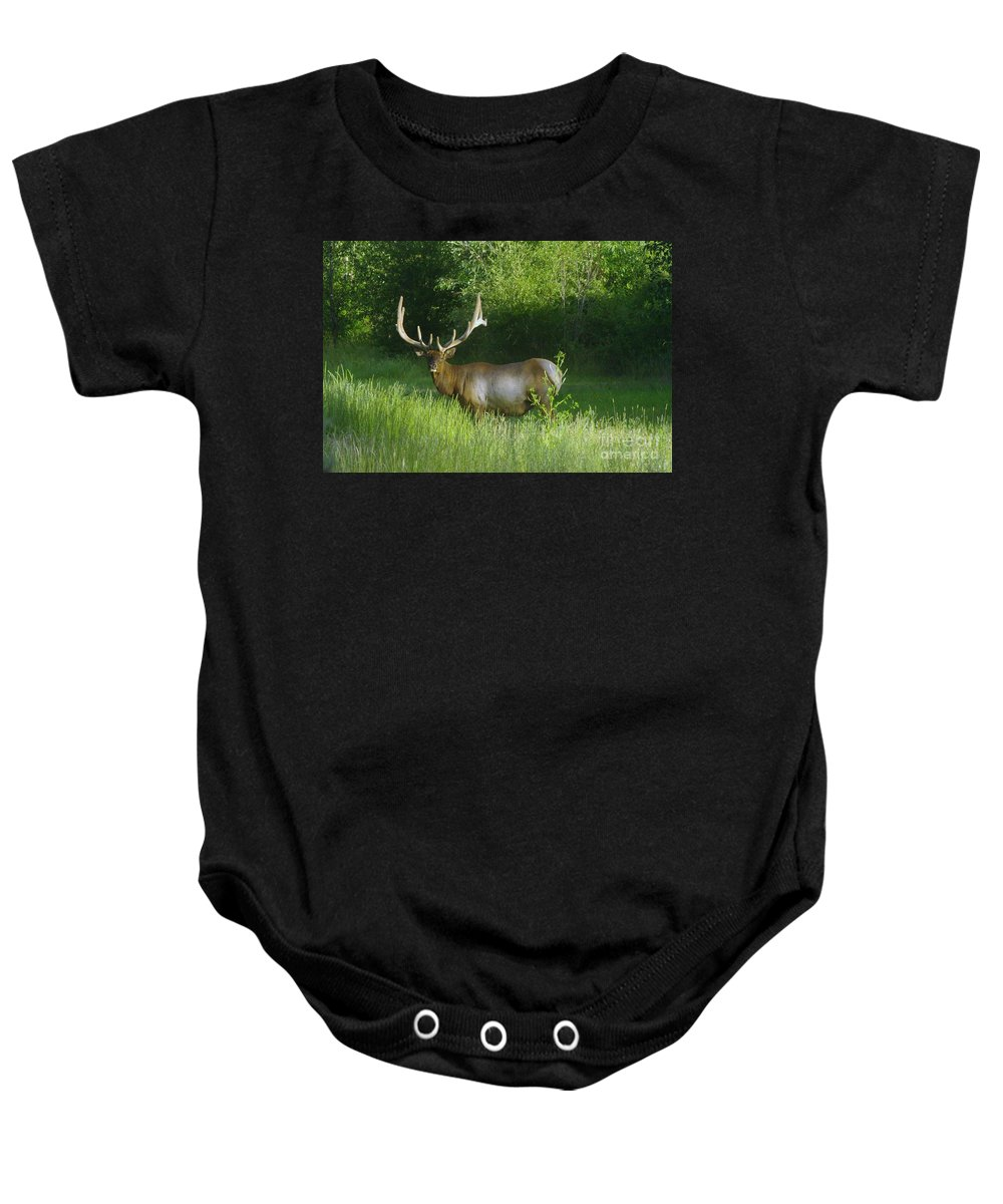Animals Baby Onesie featuring the photograph A Big Wide Rack by Jeff Swan